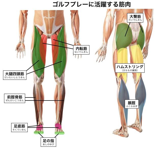下半身強化 筋トレ
