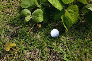 Hornet Golf