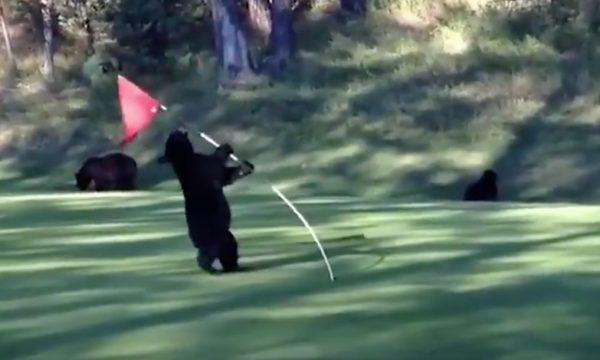 Pin Flag Bear